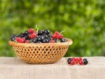 在一个篮子的红色和黑醋栗在叶子背景  免版税库存照片