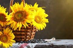 在一个篮子的美丽的向日葵在一张木桌上 库存照片