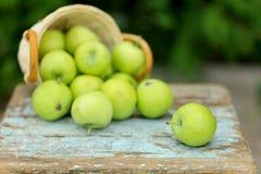 在一个篮子的自创土气绿色苹果在一把老凳子 免版税库存图片
