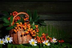 在一个篮子的花揪在老木墙壁的背景 仍然秋天生活 免版税库存图片