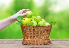 在一个篮子的苹果在反对庭院背景的木桌上 图库摄影