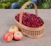 在一个篮子的蔓越桔在其次说谎织品的背景和的苹果 库存照片