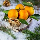 在一个篮子的蜜桔在与冷杉tre的积雪的背景 免版税图库摄影