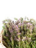 在一个篮子的麝香草在空白背景 免版税库存照片