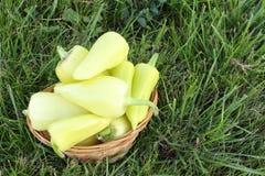 在一个篮子的黄色胡椒在一棵草在庭院里 库存照片