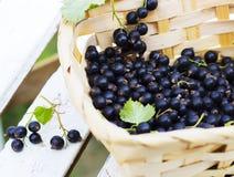 在一个篮子的黑醋栗莓果反对从白色木板条 库存照片
