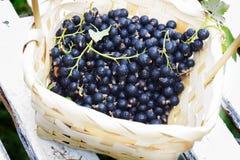 在一个篮子的黑醋栗莓果反对从白色木板条 免版税库存图片