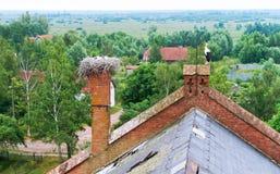 在一个红砖大厦的屋顶的鹳巢,在巢的鹳在一个老房子,与小小鸡的鹳在巢 图库摄影