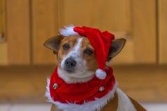 在一个红色圣诞老人帽子的一条逗人喜爱的狗 免版税库存图片