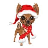 在一个红色圣诞老人帽子的小犬座 库存照片