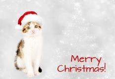 在一个红色圣诞老人帽子的小猫 快活的圣诞节 免版税库存图片
