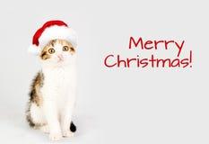 在一个红色圣诞老人帽子的小猫 快活的圣诞节 免版税库存照片