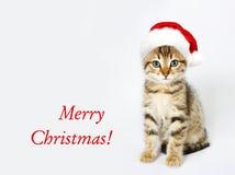 在一个红色圣诞老人帽子的小猫 快活的圣诞节 库存照片