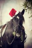 在一个红色圣诞老人帽子的马 免版税图库摄影