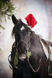 在一个红色圣诞老人帽子的黑马 免版税图库摄影