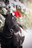 在一个红色圣诞老人帽子的黑马 库存照片