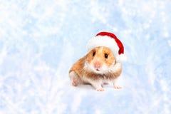 在一个红色圣诞老人帽子的仓鼠 快活的圣诞节 库存图片
