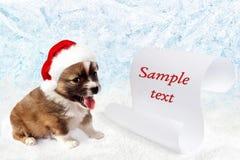 在一个红色圣诞老人` s帽子的小犬座 圈子花掌上型计算机范例文本 免版税图库摄影