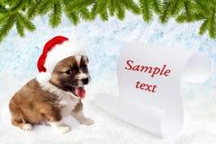 在一个红色圣诞老人` s帽子的小犬座 圈子花掌上型计算机范例文本 库存照片