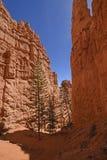 在一个红色岩石峡谷的剧烈的阴影 库存照片