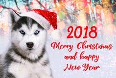 在一个红色帽子的西伯利亚爱斯基摩人狗在五颜六色的背景,圣诞节明信片 免版税库存照片