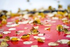 在一个红色敞篷的秋叶 库存照片