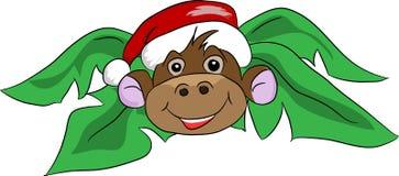 在一个红色杯子的猴子 免版税库存照片
