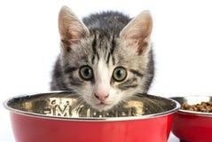 在一个红色碗的可爱的小猫饮料 库存图片