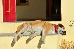 在一个红色衣领的红发狗平静地睡觉在一个黄色房子的门廊的 库存图片
