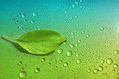 在一个绿色和蓝色背景特写镜头的绿色苹果计算机叶子 水 免版税图库摄影