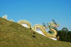 在一个绿色围场雕刻的金黄龙 库存图片