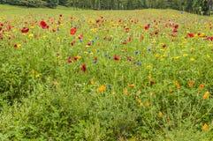 在一个绿色域的五颜六色的花在夏天 库存图片