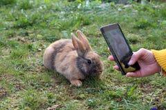 在一个绿色夏天草甸的美丽的逗人喜爱的兔子 免版税库存图片