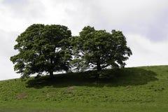 在一个绿色小山顶的结构树 免版税库存照片