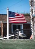 在一个绿色木瓦屋顶的上面的海鸥有一次被弄脏的美国国旗飞行的在背景中 免版税库存图片