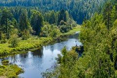 在一个绿色森林中间的温暖的夏天河 免版税库存照片
