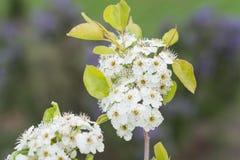 在一个绿色背景的白花 库存图片