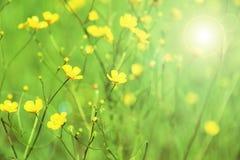 在一个绿色背景的黄色花 免版税库存图片