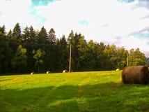 在一个绿色草甸的秸杆大包在森林前面 免版税图库摄影