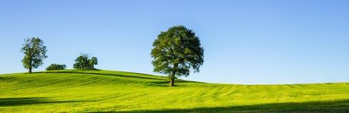 在一个绿色草甸,一个充满活力的农村风景的一棵偏僻的树与 免版税库存照片