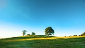 在一个绿色草甸,一个充满活力的农村风景的一棵偏僻的树与 免版税库存图片