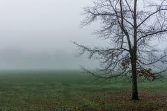 在一个绿色领域的偏僻的树在雾清早秋天冬时 库存图片