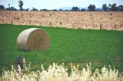 在一个绿色领域的圆的干草捆 库存照片