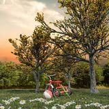 在一个绿色领域的红色三轮车 免版税库存照片