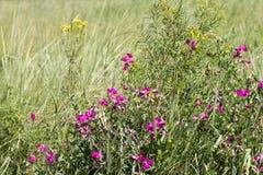 在一个绿色领域的野花 免版税库存图片