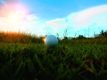 在一个绿色领域的高尔夫球在美好的自然本底 免版税图库摄影