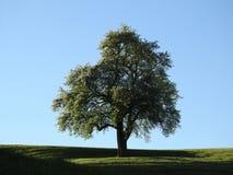 在一个绿草领域的底部的一棵唯一树 免版税库存图片