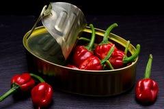 在一个罐头的微型哈瓦那人胡椒蜜饯里面 图库摄影