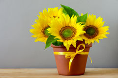 在一个罐的向日葵在桌上 免版税库存图片