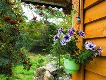 在一个罐的喇叭花在入口在一栋木乡间别墅里 装饰乡间别墅 秋天种类郊区风景设计 库存图片
